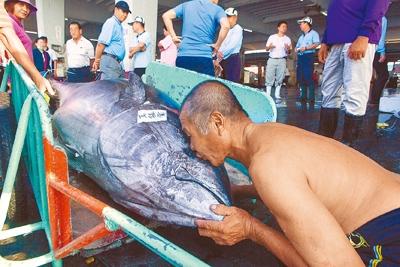一名東港魚市場工人看到難得大黑鮪,興奮作狀親吻黑鮪;台灣黑鮪捕獲量近年數量減少,漁船大多只有個位數漁獲,現在都是上岸後就被當場拍賣,等不到往年排滿魚市場地板的盛況。(黃子明攝)